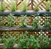 Jardín de la vertical de las verduras fotografía de archivo