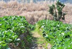 Jardín de las hojas de las fresas Foto de archivo libre de regalías