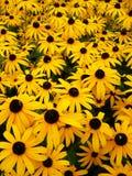 Jardín de las margaritas anaranjadas Fotos de archivo libres de regalías
