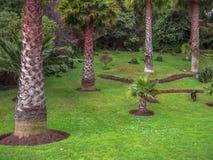 Jardín de las palmas Foto de archivo libre de regalías
