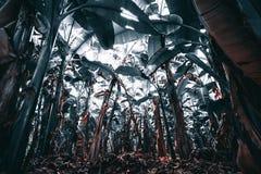 Jardín de las palmas del plátano, hojas del trullo Fotos de archivo libres de regalías