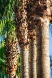 Jardín de las palmas en Turquía, lado Fotos de archivo libres de regalías