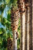 Jardín de las palmas en Turquía, lado Foto de archivo libre de regalías