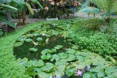 Jardín de las plantas de agua en la isla de Maldivas Imagen de archivo libre de regalías