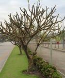 Jardín de las ramas Foto de archivo
