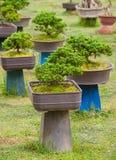 Jardín de los árboles de los bonsais Imágenes de archivo libres de regalías