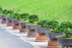 Jardín de los árboles de los bonsais Imagen de archivo libre de regalías