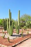Jardín de los cactus y de los succulents, Tula de Allende, México Foto de archivo libre de regalías