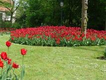 Jardín de los tulipanes Imagen de archivo libre de regalías