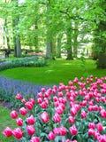 Jardín de los tulipanes Foto de archivo libre de regalías