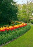 Jardín de los tulipanes Imagen de archivo