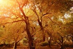 Jardín de olivos fotos de archivo