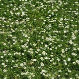 Jardín de Oporto con las flores hermosas imagenes de archivo