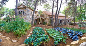 Jardín de piedra del pueblo con las verduras Fotos de archivo libres de regalías