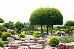 Jardín de piedras con los arbustos para la decoración del jardín Fotografía de archivo