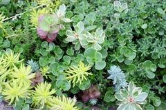 Jardín de piedras con los succulents verdes fotografía de archivo