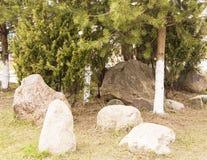 Jardín de piedras entre árboles de pino Primavera en el CIT foto de archivo