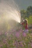 Jardín de riego de la mujer Fotografía de archivo libre de regalías