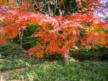 Jardín de Rikugien Lugar famoso para mirar colores del otoño en Tokio, Japón Imagenes de archivo