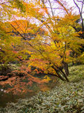 Jardín de Rikugien Lugar famoso para mirar colores del otoño en Tokio, Japón Foto de archivo libre de regalías