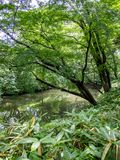 Jardín de Rikugien, Tokio, Japón fotos de archivo libres de regalías