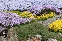 Jardín de roca Fotografía de archivo