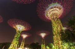 Jardín de Supertree en la noche Foto de archivo
