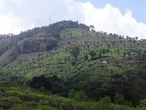 Jardín de té en las colinas Foto de archivo