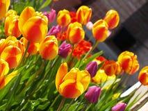 Jardín de tulipanes imagenes de archivo