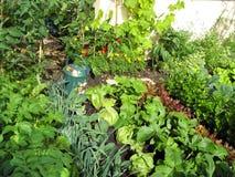 Jardín de verdes imagen de archivo libre de regalías
