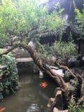 Jardín de Yu Foto de archivo libre de regalías