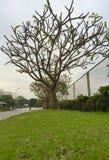 Jardín del árbol Fotos de archivo
