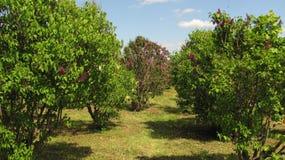 Jardín del árbol Foto de archivo
