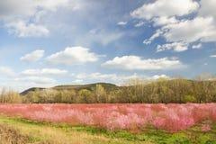 Jardín del árbol de la primavera imágenes de archivo libres de regalías