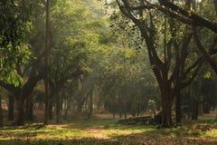 Jardín del árbol en el parque de Cubbon en Bangalore la India Imagenes de archivo