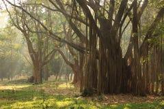 Jardín del árbol en el parque de Cubbon en Bangalore la India Foto de archivo