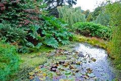 Jardín del agua Imagenes de archivo