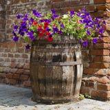Jardín del barril de la petunia Foto de archivo libre de regalías