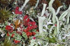 Jardín del bosque con los liquenes Imágenes de archivo libres de regalías