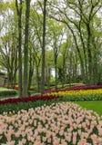 Jardín del bosque del cuento de hadas con la corriente y los tulipanes coloridos fotos de archivo