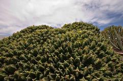 Jardín del cactus imagen de archivo libre de regalías
