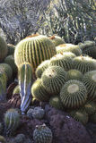 Jardín del cactus Imagenes de archivo