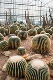 Jardín del cactus imágenes de archivo libres de regalías