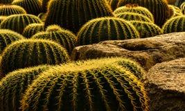 Jardín del cactus fotos de archivo