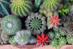 Jardín del cactus de la visión superior, foco de centro imagen de archivo libre de regalías