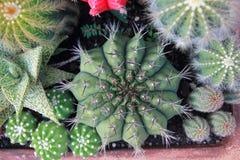 Jardín del cactus de la visión superior, foco de centro imágenes de archivo libres de regalías