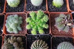Jardín del cactus de la visión superior, foco de centro fotos de archivo