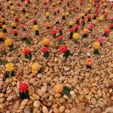 Jardín del cactus del color Fotografía de archivo libre de regalías