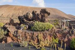 Jardín del cactus en el pueblo de Guatiza, Lanzarote, islas Canarias, España Imágenes de archivo libres de regalías