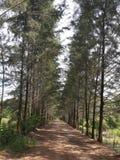 Jardín del camino Imagen de archivo libre de regalías
